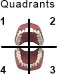 How to Brush Your Teeth, Mouth Quadrants